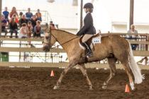 Lily Rose Surprenant au Championnat d'équitation western du Québec