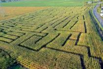 Le Grand labyrinthe de Sainte-Anne parmi les 15 nouveautés plein-air de l'été au Québec