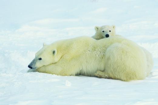 À qui appartient le Pôle Nord?