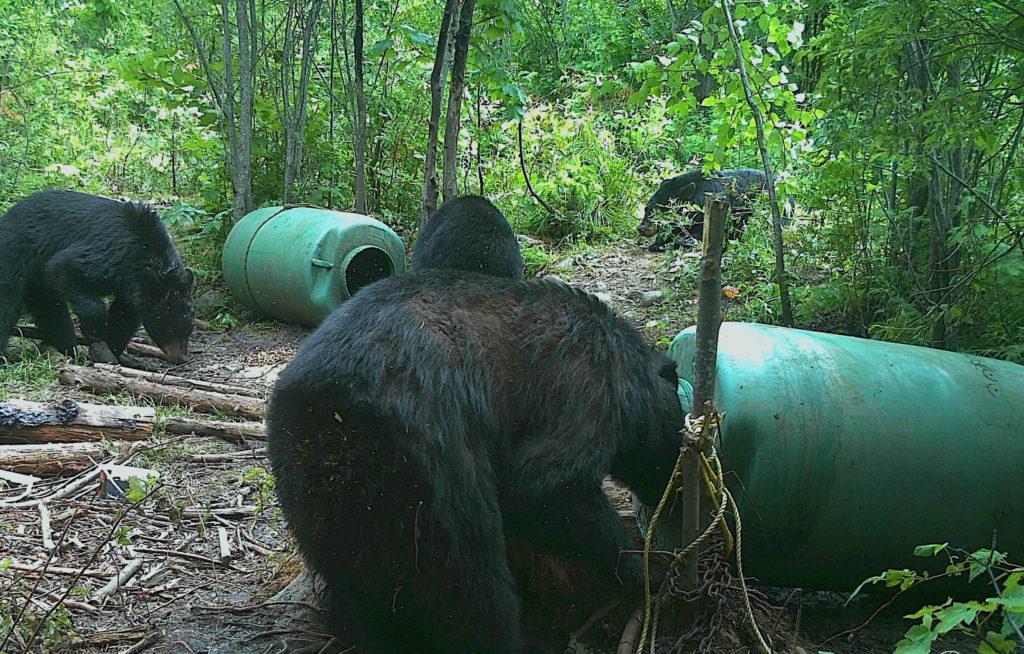 Chasse à l'ours : comment maximiser vos visites à votre site
