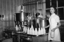 Histoire : le lait, une industrie championne sur la Côte-du-Sud
