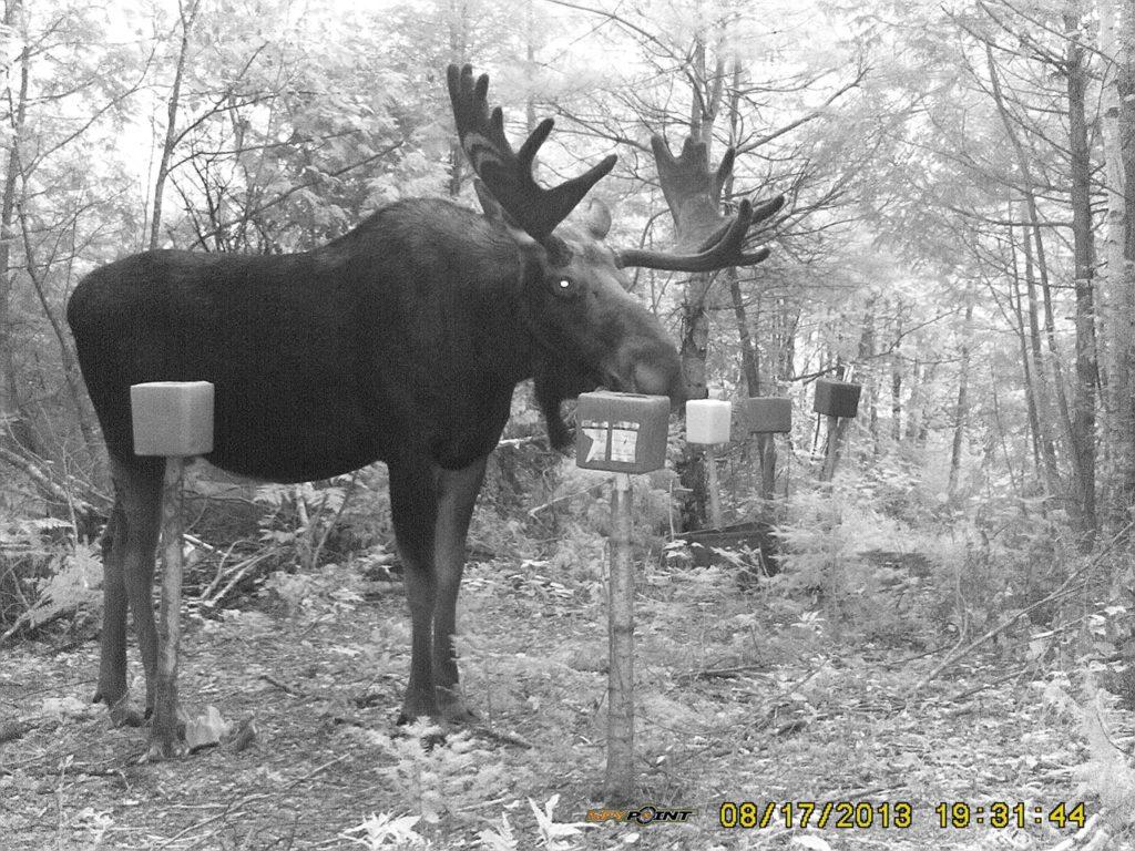 Derniers préparatifs sur le terrain avant la saison de chasse à l'orignal